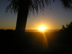 sunrise-through-paspalum-009